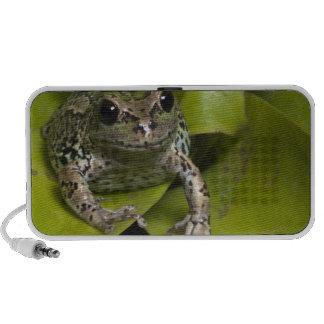 Riobamba Marsupial Frog Gastrotheca Mp3 Speakers