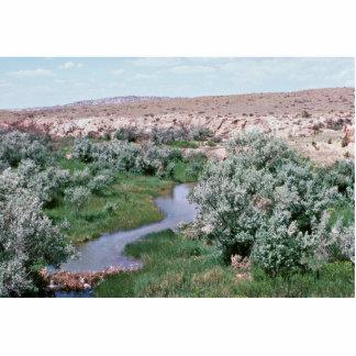 Riparian Habitat, Wyoming Cut Out