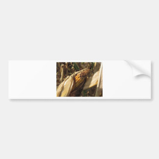 Ripe and ready to harvest ear of corn bumper sticker