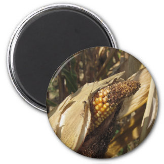 Ripe and ready to harvest ear of corn magnet