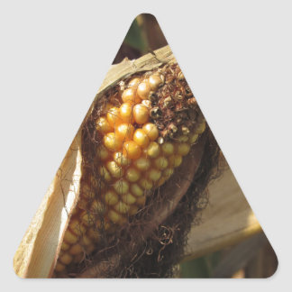 Ripe and ready to harvest ear of corn triangle sticker