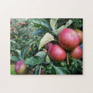 Ripe apples jigsaw puzzle