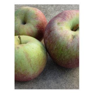 Ripe apples postcard