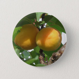 Ripe apricots hanging on the tree . Tuscany, Italy Pinback Button