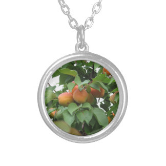 Ripe apricots hanging on the tree . Tuscany, Italy Silver Plated Necklace
