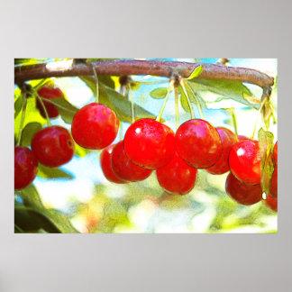 Ripe Cherries Posters