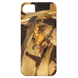 Ripe ear of corn at sunset iPhone SE/5/5s case