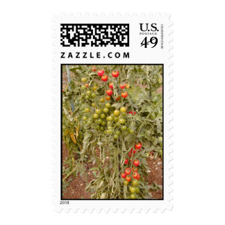 Ripe for the Pickin' Stamp