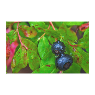 Ripe huckleberries in a light rain canvas print