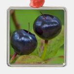 Ripe huckleberries in the Flathead National 2 Ornaments
