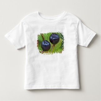Ripe huckleberries in the Flathead National 2 Toddler T-shirt