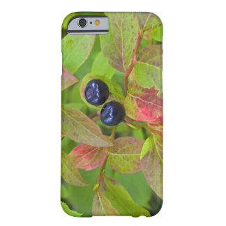 Ripe huckleberries in the Flathead National Barely There iPhone 6 Case
