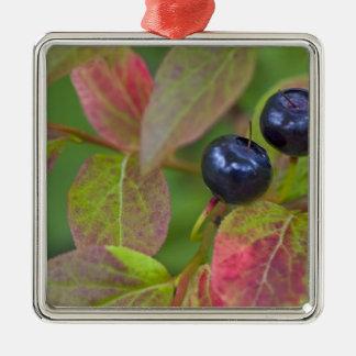 Ripe huckleberries in the Flathead National Metal Ornament