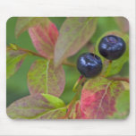 Ripe huckleberries in the Flathead National Mouse Pad