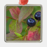 Ripe huckleberries in the Flathead National Christmas Ornaments