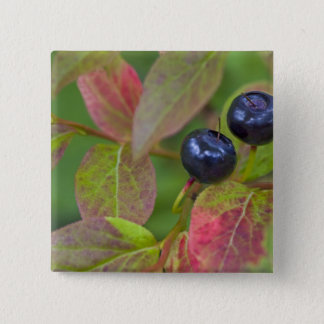 Ripe huckleberries in the Flathead National Pinback Button
