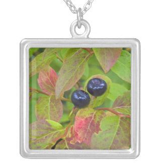 Ripe huckleberries in the Flathead National Silver Plated Necklace