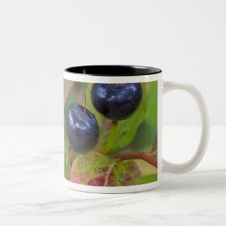 Ripe huckleberries in the Flathead National Two-Tone Coffee Mug