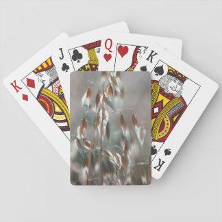 Ripe Oats (Avena Sativa) Close Up. Ceres, Boland Poker Cards