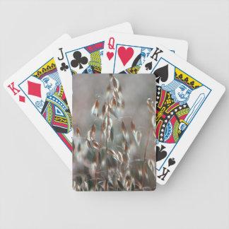 Ripe Oats (Avena Sativa) Close Up. Ceres, Boland Deck Of Cards