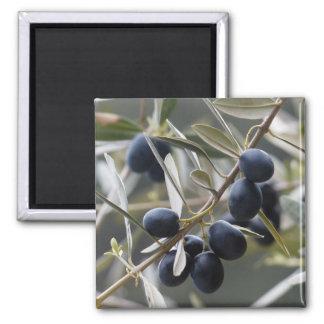 Ripe Olives on Olive Tree Branch Fridge Magnets