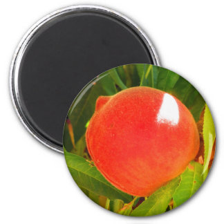 Ripe Peach Magnet