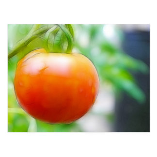 Ripe Red Heirloom Tomato Post Card