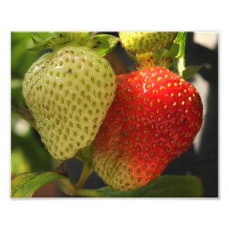 Ripe Strawberries Photo Print