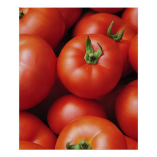 Ripe Tomatoes - Bright Red, Fresh Poster