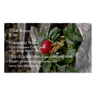 Ripen Rose hip on trellis Double-Sided Standard Business Cards (Pack Of 100)