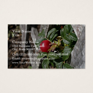 Ripen Rose hip on trellis Business Card