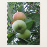 "Ripening apples on a old apple tree. planner<br><div class=""desc"">Taken in my garden a super old tree.</div>"