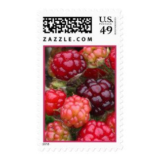 Ripening Blackberries Postage
