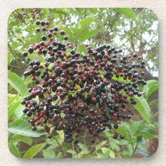 Ripening Elderberries Cork Coaster
