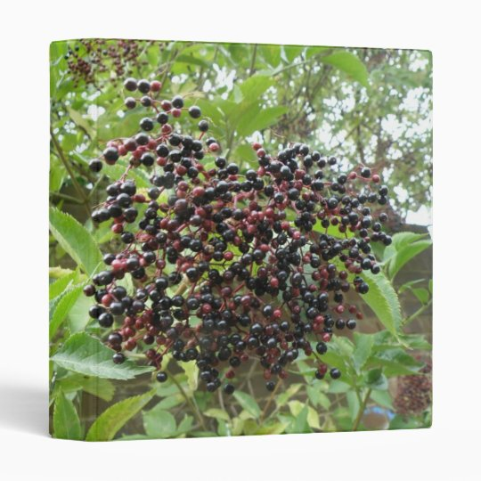 Ripening Elderberries Photograph Album 3 Ring Binder