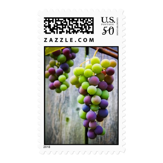 Ripening Grapes stamps