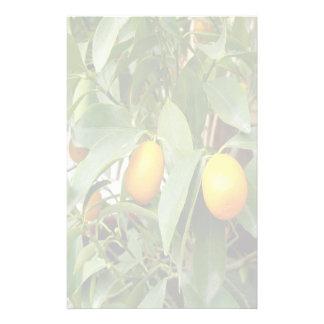Ripening Orange Kumquats Stationery