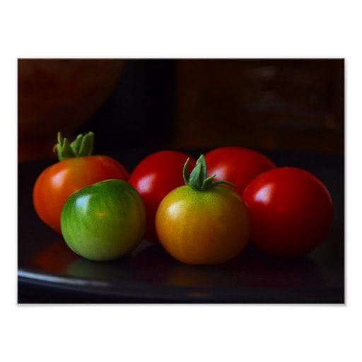 ripening tomatoes  posterl FROM 14.95 Poster