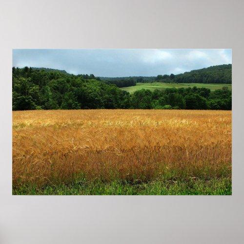 Ripening Wheat print