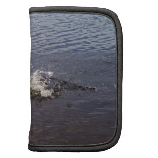 Ripples in a lake, from a fish jumping planners