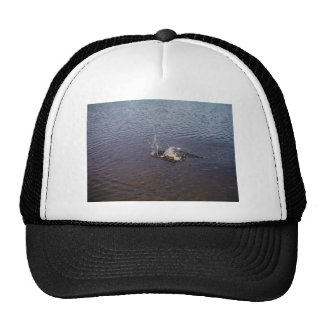 Ripples in a lake, from a fish jumping trucker hat