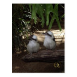 Risa de Kookaburras Postal