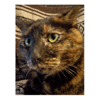 risa Pretty face kitty postcard