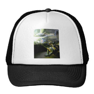 Rising Turtles Trucker Hat