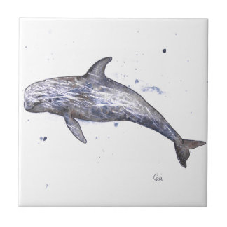 Risso Dolphin Illustration Tile