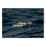 Risso's dolphin greeting card