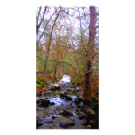 River and Bare Trees Photocard Photo Cards