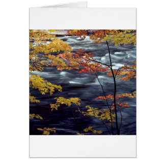 River Autumn Colors A Rushing Card