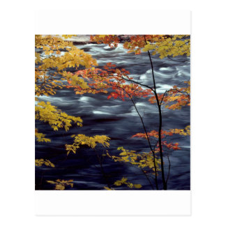 River Autumn Colors A Rushing Postcard