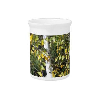 River birch fall drink pitchers